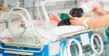 cấp cứu thú cưng