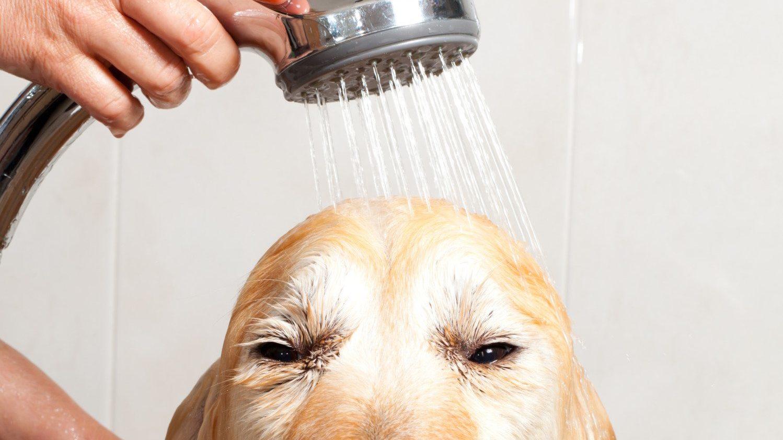 24704611899 fef1300e23 o dog shower e1522089154409