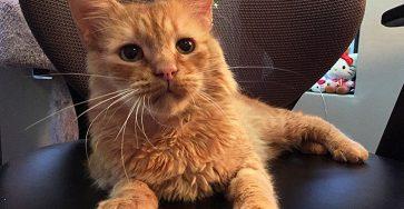 Feline panleukopenia Danny chair
